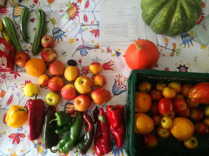 Obst und Gemüse für die Herstellung von Chutneys in der Klimawerkstatt Werder