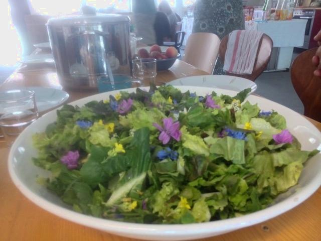 Kräuterwanderung Klimawerkstatt Werder - Salat aus Wildkräutern